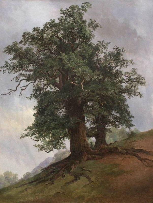 Старый дуб.  1866