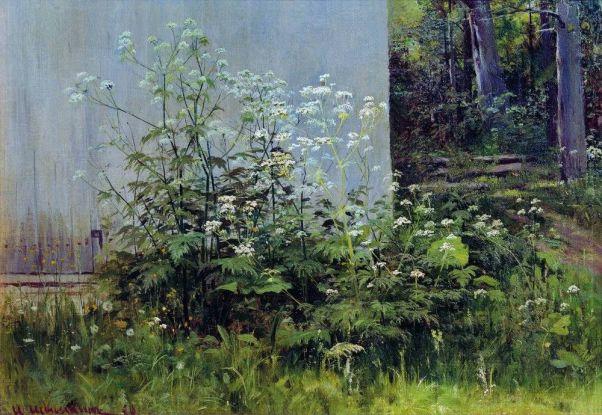 Цветы у забора.Середина 1880-х 38х54