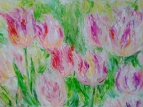 Бело-розовые тюльпаны