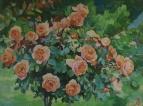 Дерево роз