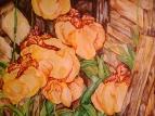 орхидеи за сараем