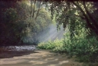 Утро в заповедном лесу