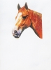 Взгляд медной лошади. Sight of a Copper Horse