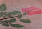 Роза на голубом
