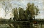 Деревья среди болота