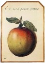 Ceci n'est pas une pomme (Это не яблоко)
