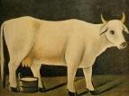 Белая корова на черном фоне. Картон, масло. 80х100 ЧС