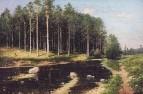 Сосновый бор на берегу реки