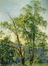 Оливковое дерево. Долина Ариччи. 1842