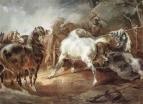 Дерущиеся лошади
