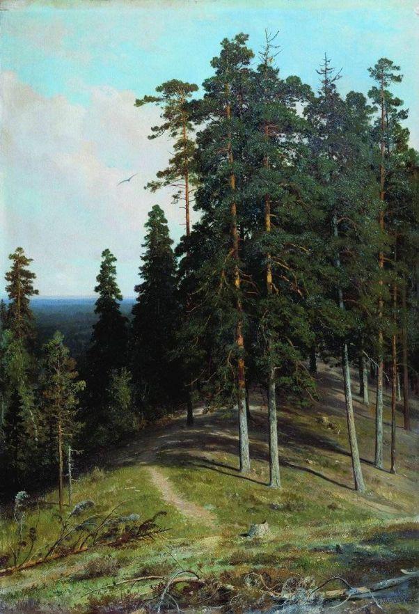 Лес с горы. 1895ю Шишкин