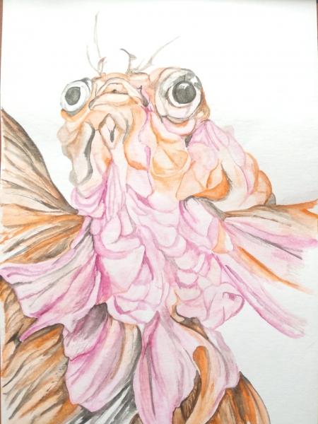 золотая рыбка, желаний не исполняет