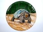 Слоновая черепаха, или галапагосская черепаха (лат. Chelonoidis elephantopus)