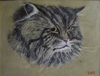 кот Чимберлен