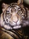 тигр /  Ольга Прокина