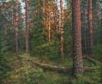 В вечернем лесу /  Валерий Ниминущий