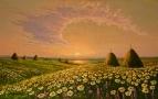 Ромашковый рай