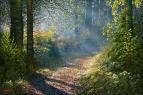Тёплое утро в Кошевском лесу