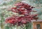 Пейзаж с красным деревом