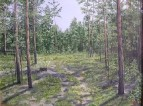 лес у села Канонерка