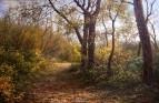 Osen v lesu