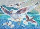 Чайки над бухтой