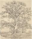 Большой дуб