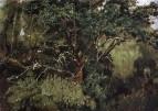 Ахтырский дуб. Начало 1880-х