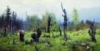Горелый лес. 1881